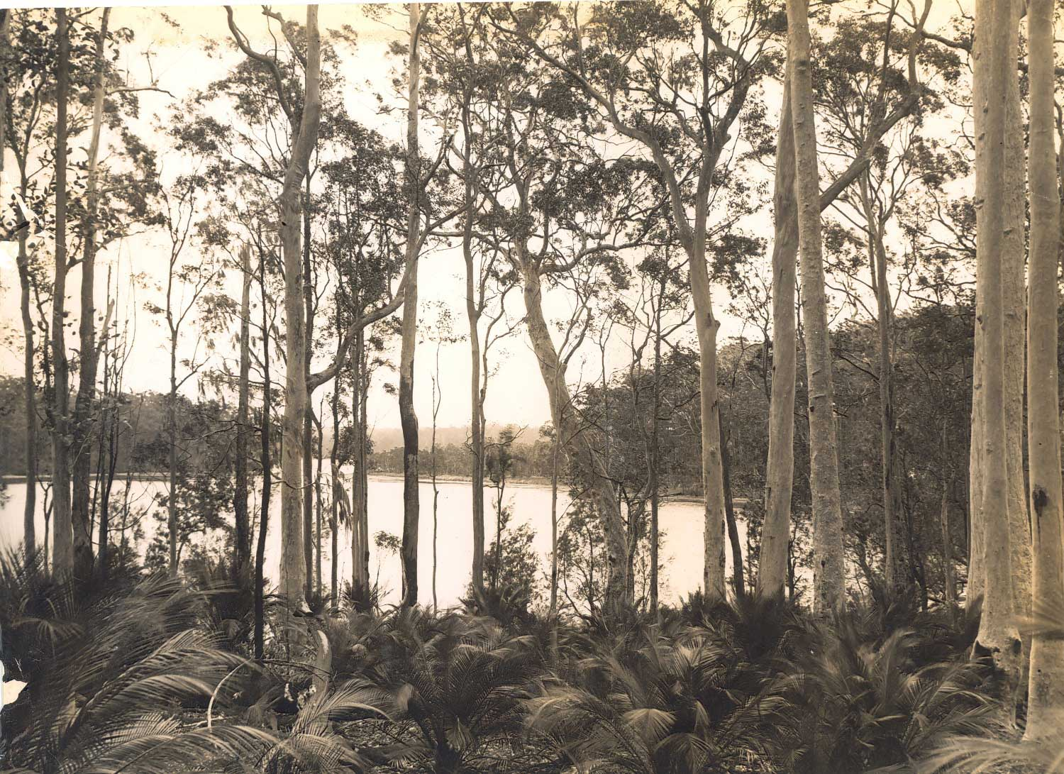 A view through trees to Durrass Lake, New South Wales