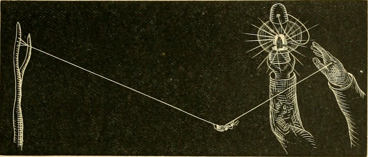 A spider walking on a thread towards light